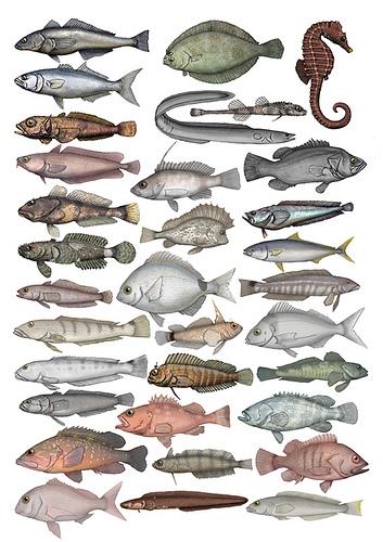 """Simposio """"Sistemas sensoriales de los peces: estructura, función, desarrollo, plasticidad y evolución"""""""